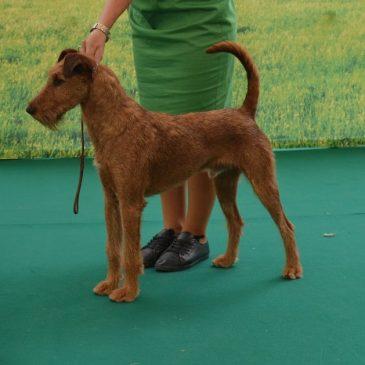 Nový chovný pes
